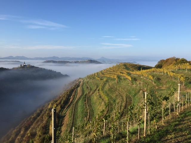 gorjup vinogradništvo