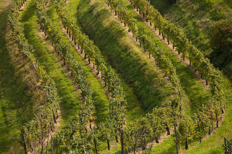 F001345-e31_179_vinogradi_orig_jpg-photo-s