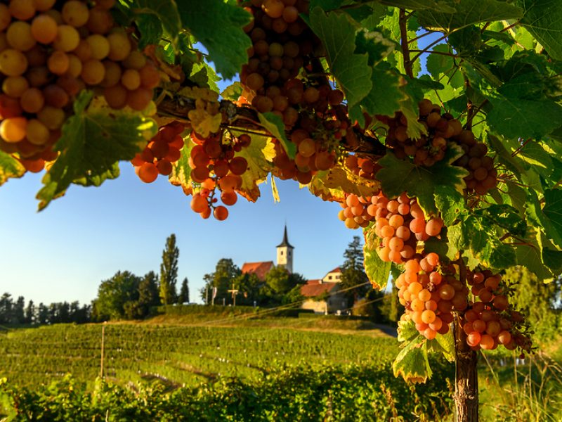 personalized wine tours in Slovenia for small groups