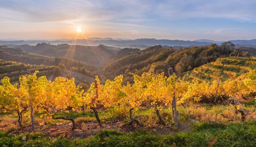Haloze-vineyards-sunrise